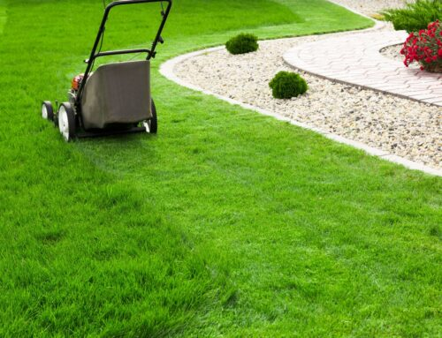 Lawn Care 101 for New Homeowners