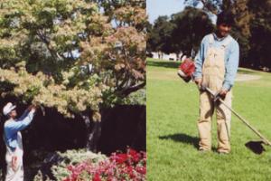 AllSeasons Garden Maintenance