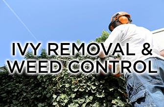 ivy removal and weed control