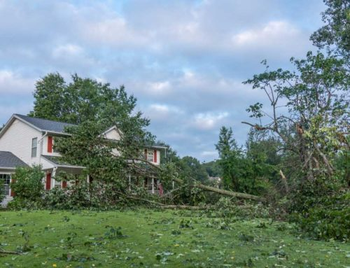 When to Remove a Tree & Why to Outsource the Job